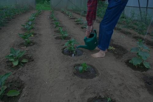 gardening-20200617 0059